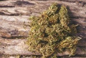 descarboxilar el cannabis